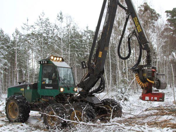 Těžba v Bělověžském pralese je podle podkladu pro soud porušením práva EU