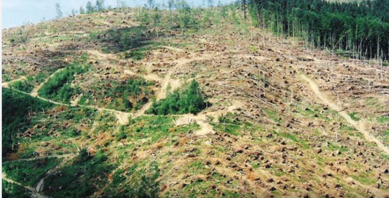 Lesy alebo holiny