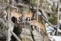 Doba lovu vlků byla v Šlesvicku-Holštýnsku prodloužena