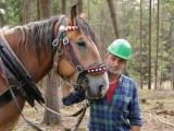 """Společné """"tažení"""" za zachování chladnokrevných koní v lesích"""