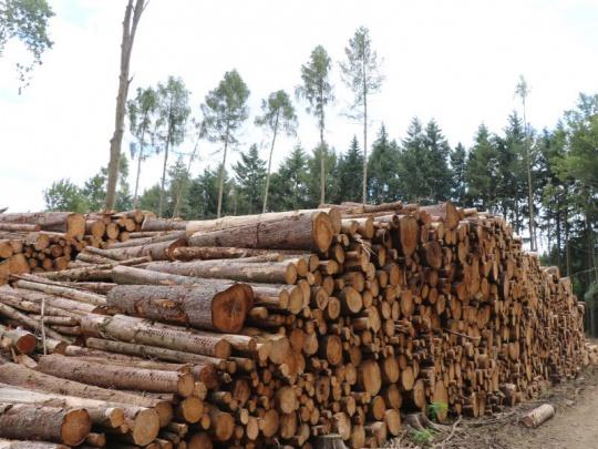 Zvyšování lesní těžby v Evropě není tak dramatické.  Tým vědců vyvrátil studii Evropského výzkumného centra (TZ FLD)