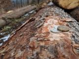 Nestátní majitelé lesů žádají o kompenzaci škod po kůrovci 5,3 mld. Kč