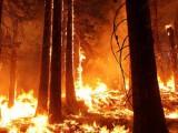 Rozsáhlý lesní požár v Portugalsku si vyžádal nejméně 64 mrtvých
