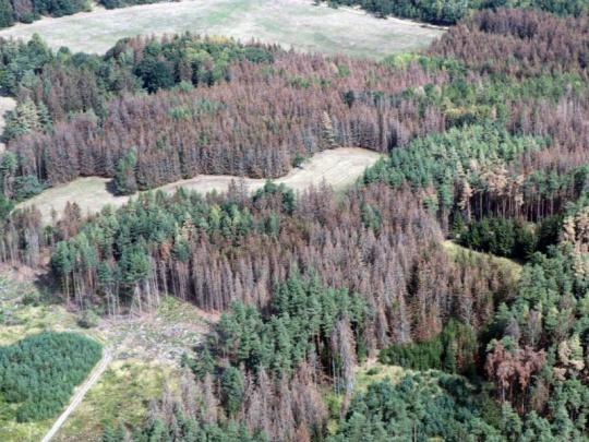 Podle lesnického think tanku letos škody v lesích přesáhnou 12 mld. korun