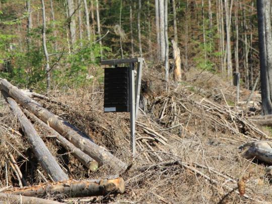 SVOL žádá podporu vlastníků lesů při schvalování rozpočtu