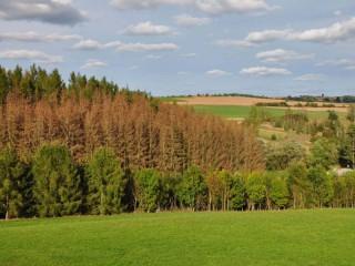 VÚLHM popsal a ověřil metody hodnocení sucha