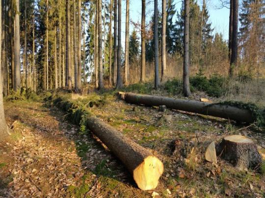 Senát schválil novelu lesního zákona