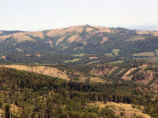 Nové OOP plošně prodlužuje povinnost zalesnění na 5 let, přináší další změny