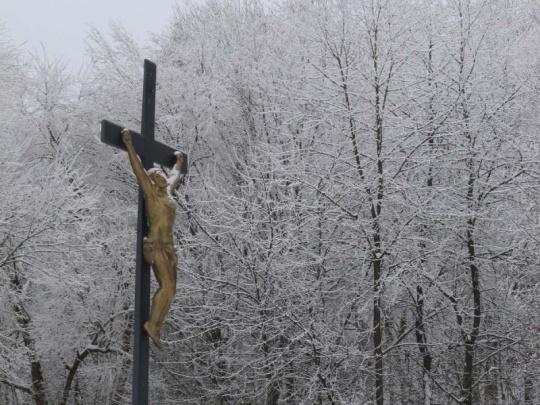 Katolická církev loni investovala do lesů půl mld. korun