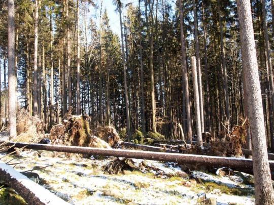 V souvislosti s víkendovými větrnými kalamitami zastavily VLS plánované těžby