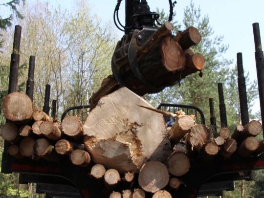 Soud EU: Polsko těžbou v Bělověžském pralese porušilo unijní právo