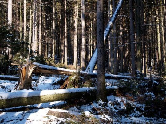 Vichřice poničila Lesům ČR asi 300 000 kubíků dřeva