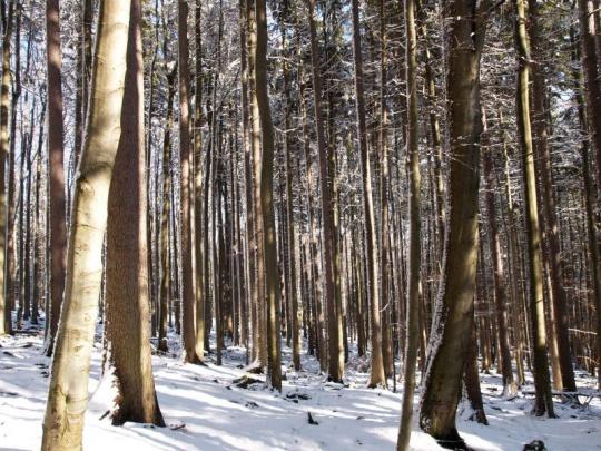 LČR letos koupí přes 1600 ha lesů za 400 mil. korun