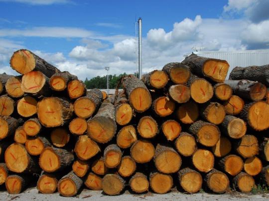 Lesům ČR loni klesl čistý zisk o 26 procent