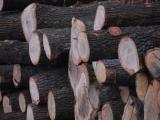 Nejvíce vítězných nabídek v tendru 2019+ podala Jihozápadní dřevařská