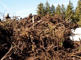 Dřevo je stále hlavním obnovitelným zdrojem energie v Evropě