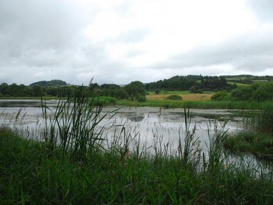 Lesníci by měli najít nástroj, jak si nechat zaplatit za vodohospodářské funkce