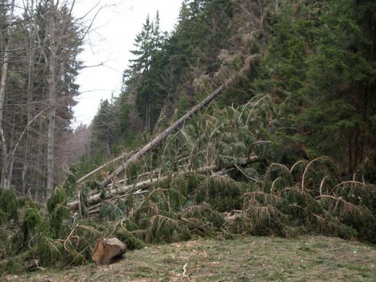Škody po víkendových vichřicích odhadují LČR na 300 000 kubíků