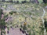 MZe vydalo metodiku obnovy lesa po kůrovcové kalamitě