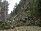 Lesníci sčítají škody po vichřici Eberhard
