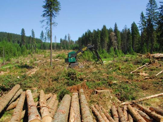 Moravskoslezský kraj žádá více lesnických odborníků na obcích