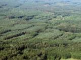 MZe slíbilo vyplácení podpory nestátním vlastníkům lesů do konce roku