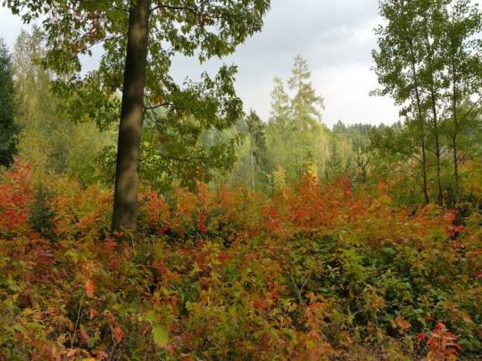 Skupina poslanců předložila pozměňovací návrhy k lesnímu zákonu, lesníci mají výhrady