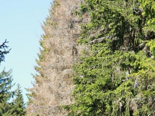 SVOL žádá ministra Tomana, aby sehnal peníze na ztráty lesníků