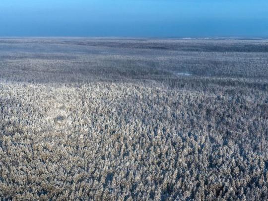 IDNES.cz: Čínské firmy masivně těží lesy na Sibiři