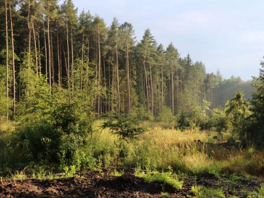 Velký Den za obnovu lesa se nekoná, malé pokračují