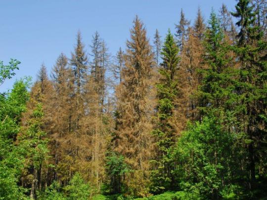 Ve Sněmovně se konal seminář o kalamitě v českých lesích