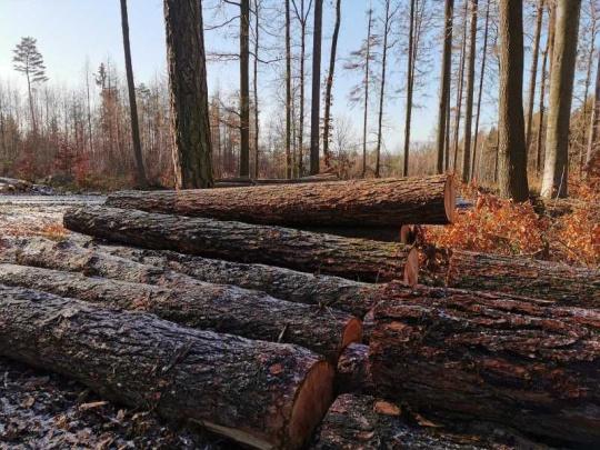 Vláda schválila koncepci státní lesnické politiky do roku 2035