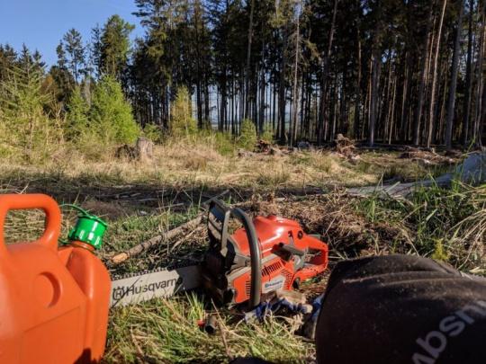 LČR v pololetí zvedly těžbu kůrovcového dřeva o 112 procent
