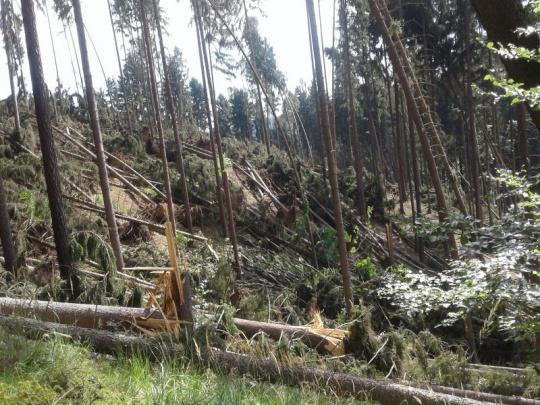 Ministerstvo zemědělství připravilo návrh na zastavení úmyslné těžby lesních porostů