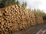 Čína má zájem o další české dřevo