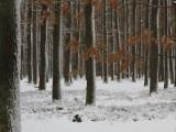 """Vítězem """"náhradního"""" tendru LČR je Uniles"""