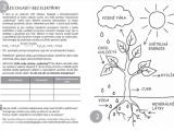 Týden lesů má letos téma Les – zelená klimatizace