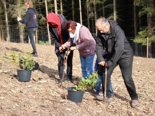 Lesy ČR pořádají druhý ročník Dne za obnovu lesa