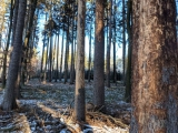 Cena lesů za časů kůrovce