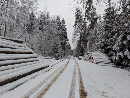Rok 2018: lesnictví, jak ho neznáme
