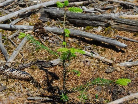 Lesnická sdružení se ohradila proti připomínkovému řízení k vyhlášce 83/1996