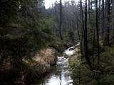 SVOL k petici Zelených: České lesy zadržují vodu v krajině i bez další certifikace