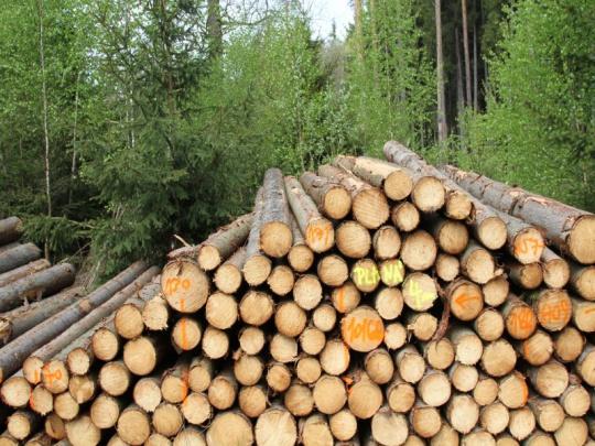 Lesy ČR chytají prodej svých 50 procent v HLDS