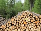 Lesy ČR chystají prodej svých 50 procent v HLDS