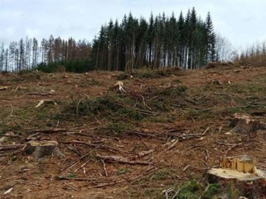 Město Havlíčkův Brod dostalo pokutu za pozdní zpracování a asanaci kůrovcových stromů