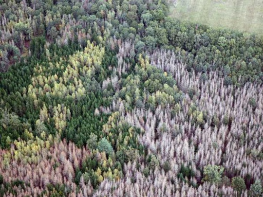 CZECH FOREST zveřejnil prognózu vývoje lesnicko-dřevařského sektoru