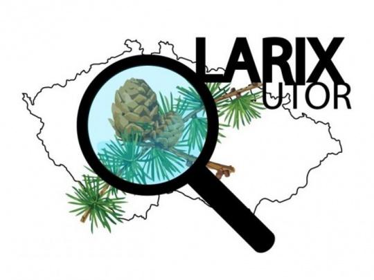 Nový projekt LARIXUTOR: Možnosti využití modřínu opadavého v českých lesích