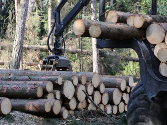 Lesnicko-dřevařský sektor se potýká s přetlakem kalamitního dříví