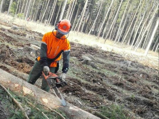 Lesy ČR svolaly jednání kvůli nedostatku dělníků v lesnictví