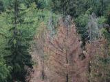 Stav lesů na Vysočině se kvůli suchu zhoršuje nejrychleji v ČR